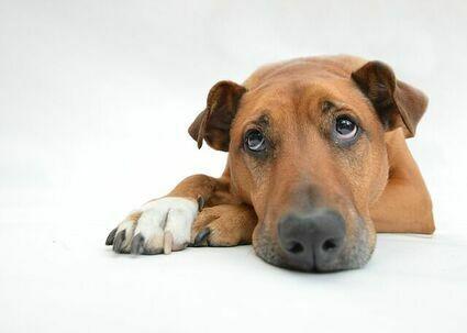 Tych produktów nigdy nie dawaj psu. Mogą go nawet zabić!