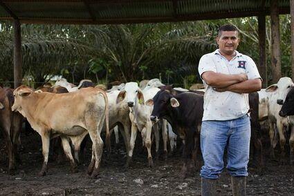 Możesz adoptować kozę w Niemczech, krowę w Hiszpanii albo drzewko kakaowca na Filipinach. W zamian dostaniesz produkty do domu