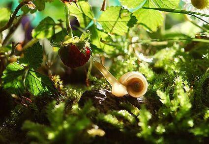 Jak pozbyć się skutecznie ślimaków z ogrodu?