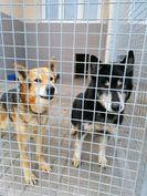 Wolontariusze ze Stanowic kolejny raz pomogli zwierzętom!