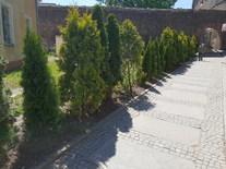 Więcej zieleni i urokliwych krzewów
