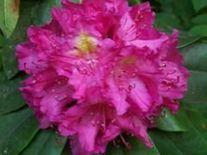 Kwiat różowy