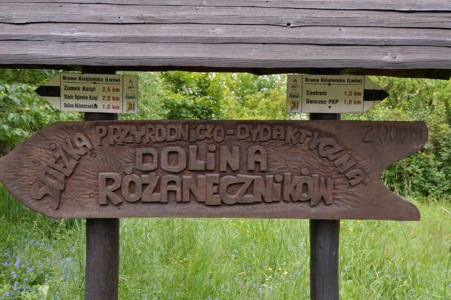 KIERUNKOWSKAZ Dolina Różaneczników
