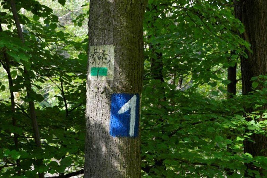 Znak na drzewie