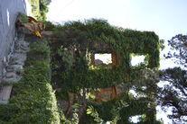 Maskotka Sowa przy ruinach
