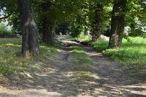 Park przy ul. Jeleniogórskiej- polna droga