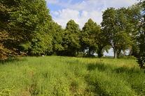Park przy ul. Jeleniogórskiej- łąka