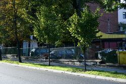 Nowo zasadzone drzewa na ulicy Aleje Lipowe.