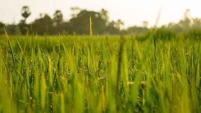 Badania statystyczne z zakresu rolnictwa