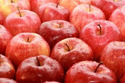 Jabłka dla mieszkańców Gminy Jabłonna