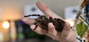 """""""Fascynujący świat pająków i skorpionów""""."""