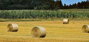 Trwa nabór na rachmistrzów spisowych w Powszechnym Spisie Rolnym