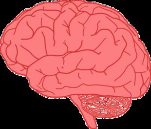 Jakiego koloru jest twój mózg?