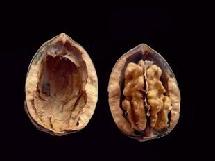 Owoce niczym nasze części ciała