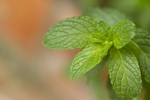Mięta - magiczna roślina dla zdrowia i urody