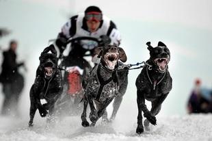 Bikejoring, czyli perfekcyjna współpraca człowieka i psa