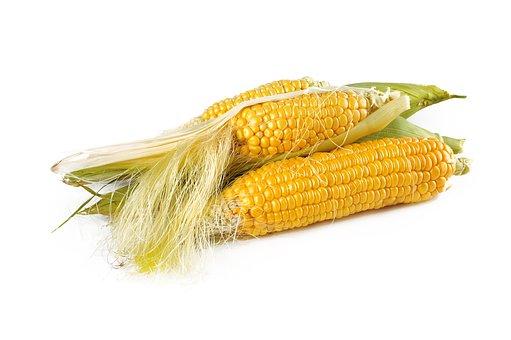 Kukurydza - prezent od kosmitów?