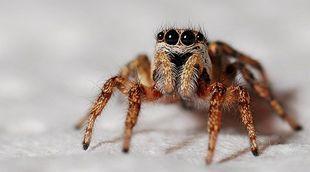 Lęk przed pająkami sprawia, że wydają się nam większe