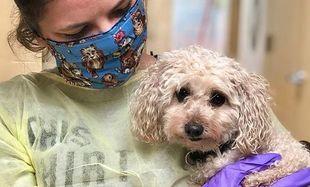 Suczka, której opiekunowie zmarli z powodu koronawirusa, podbiła serca Amerykanów