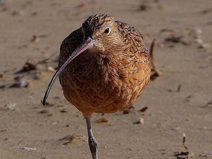5 ciekawostek o ptakach