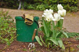 Praca w ogrodzie daje szczęście! I to za sprawą małej bakterii