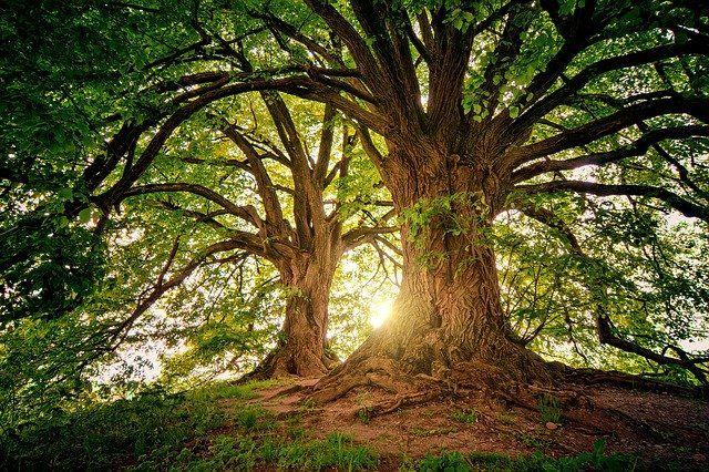 Drzewa, które leczą. Jak skorzystać z ich mocy?