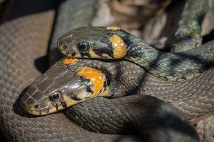 Kiedy śnią się węże - czy to zawsze zły znak?