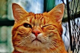 Magiczna moc kotów - sprawdź, o czym mówi kolor kota!