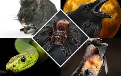 Powiedz, którego z tych zwierząt nie chciałbyś spotkać, a dowiesz się, czego się boisz najbardziej