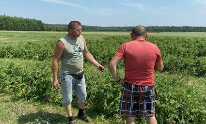 """""""W tym roku truskawek i malin nie będzie, czekamy na pomoc od państwa"""". Rolnicy z Lubelszczyzny stracili całe plantacje"""