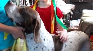 Zaginął pies wyżeł angielski - Pointer