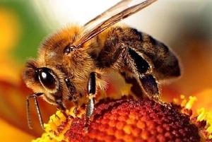 Komunikat: stosowanie środków ochrony roślin w sposób bezpieczny dla pszczół