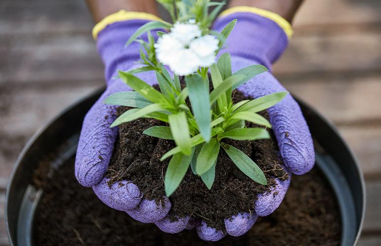 Przypominamy o zniżce za kompostowanie bioodpadów !