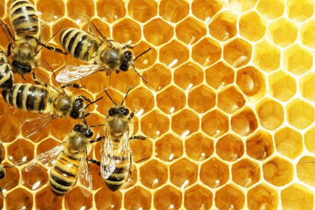"""Stowarzyszenie WyGramy Opoczno włączyło się w akcję """"Opoczno przyjazne pszczołom"""""""