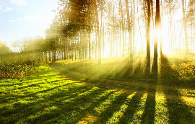 Ogłoszenie o programie monitoringu lasów z dn. 5.07.2016 - OŚ.6164.66.2016