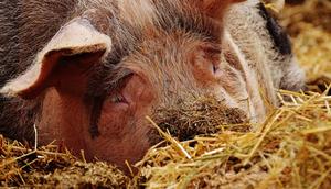 Szanowni Państwo, Hodowcy zwierząt gospodarskich
