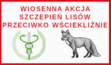 Wiosenna akcja szczepień lisów przeciwko wściekliźnie - 24-26 kwietnia 2021