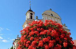 Miasto w kwiatach