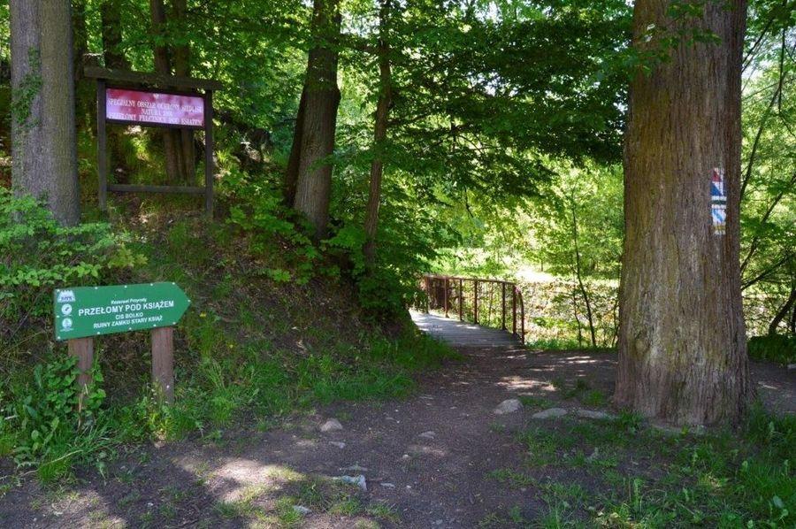 Droga w lesie ze znakami