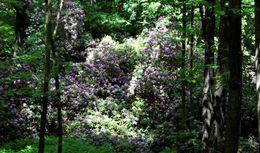 Las i kwiaty