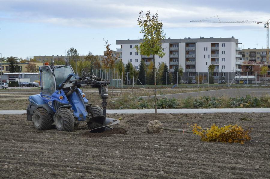 Sadzenie drzew na na terenie budowy Parku Sportowego