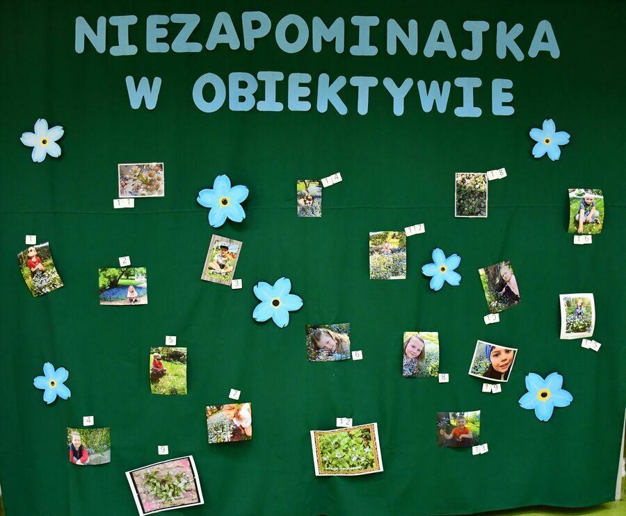 Tablica ze zdjęciami konkursowymi pn. Niezapominajka w Obiektywie