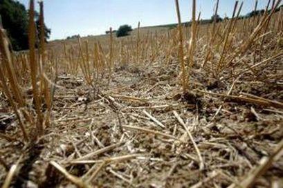 Komisja ds. suszy szacuje straty