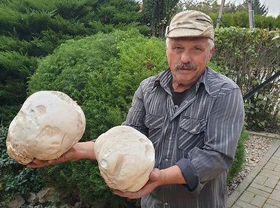 Taaakie grzyby…. tylko w Kalnie