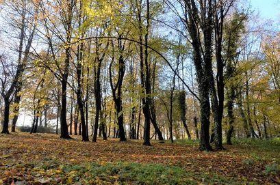 Sprzątamy Park Miejski w Żarowie