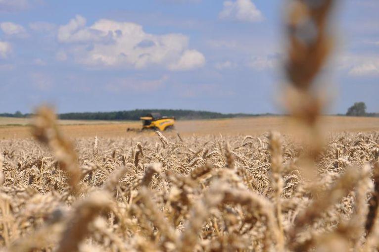 Jak walczyć z plagą gryzoni na polach? Informacje dla rolników