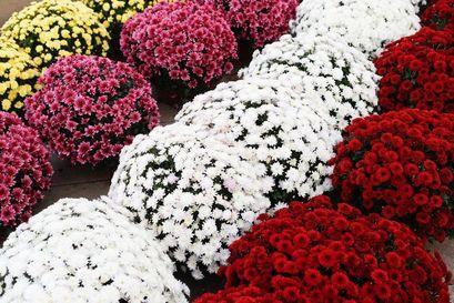 Wspieramy handlowców. Dziś Wielki Targ Kwiatów na żarowskim targowisku