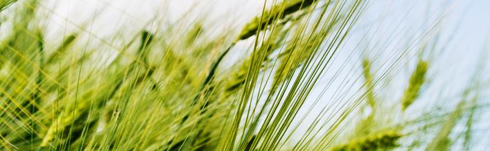 Zawiadomienie w sprawie oświadczeń o stratach w uprawach rolnych