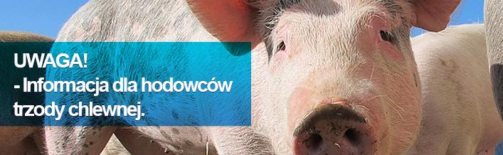 Informacja odnośnie sytuacji epizodycznej w odniesieniu do afrykańskiego pomoru świń (ASF)