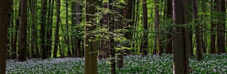 Uwaga! Okresowy zakaz wstępu do lasu od 1 do 31 maja 2019 r.